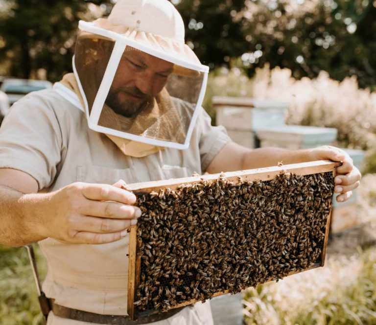 Beekeeper wearing a bee suit holding a beehive frame full of bees