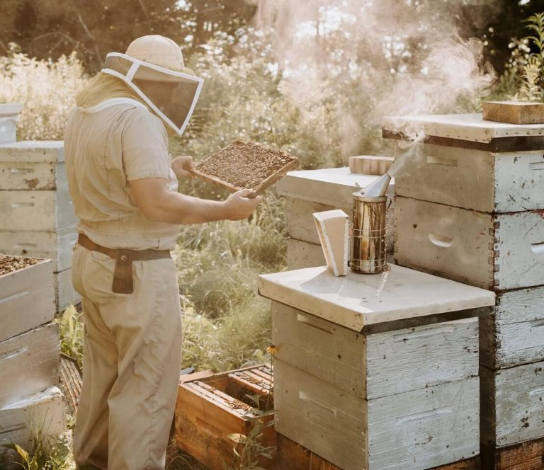 Bee Keeper in the Process of Making Honey