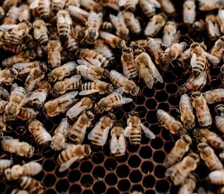 Close up image of bees in the hive
